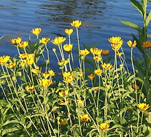 Lisle, IL Pond by Adam Kuehl