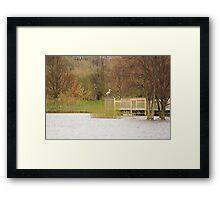 A Posing Crane Framed Print