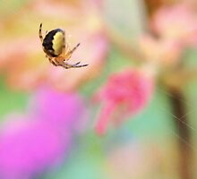 Spider Macro by Goose