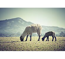 Grazing II Photographic Print