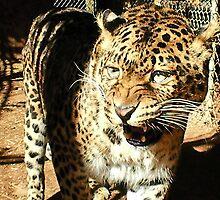 Leopard attitude  by AnnaRingo