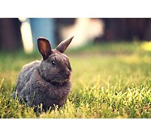 The Velveteen Rabbit Photographic Print