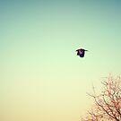 Fly Far, Far Away by Christopher Burton