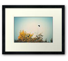 Fly Over Framed Print