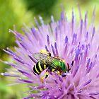 Wasp & Thistle by Elizabeth Bennefeld