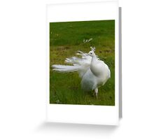 White Peacock at Scone Greeting Card