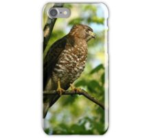 Broad winged Hawk iPhone Case/Skin