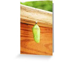 Budding Chrysalis  Greeting Card