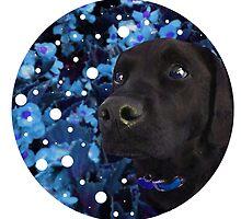 Starry-Eyed Dog Named Izzy by vwrites