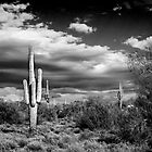 Desert Clouds by George Lenz