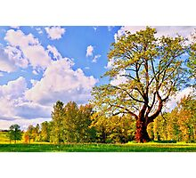 Tree and Park Photographic Print