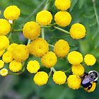 bee on yellow tansy by Linda Makiej