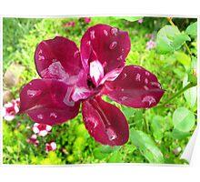 Diamond-studded Rose Poster