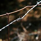 Barbed Wire 2 by Karah Couch