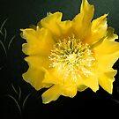 Pretty in Yellow by Rosalie Scanlon
