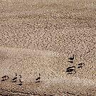 Drought by Vicki Pelham