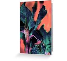 Lily of a different color ! Greeting Card
