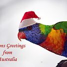 Australian Rainbow Lorikeet Christmas Greeting Card  by Patricia  Knowles
