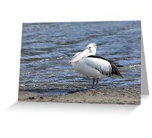 Pelican In Waiting Greeting Card