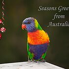 Rainbow Lorikeet Seasons Greetings card  by Patricia  Knowles