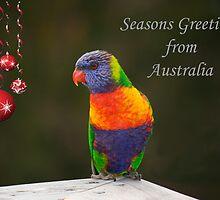 Rainbow Lorikeet Seasons Greetings card  by Patricia  Knowles