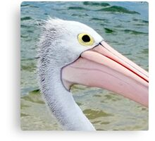 Eye of a Pelican Canvas Print