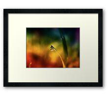 rainbow dew drop Framed Print