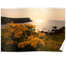 Wild flowers in sunset Poster