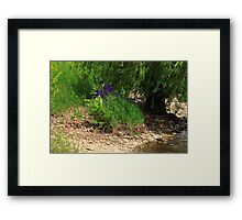 Purple by the Bank Framed Print