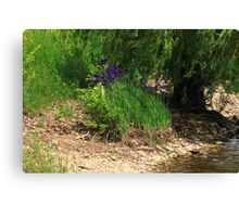 Purple by the Bank Canvas Print