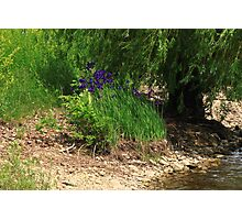 Purple by the Bank Photographic Print