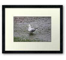 FloodGull Framed Print