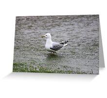 FloodGull Greeting Card