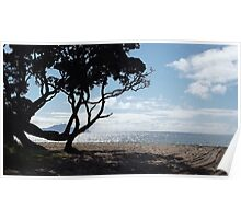 Through the trees at Langs beach Poster