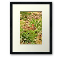 Wascaly Wabbit Framed Print