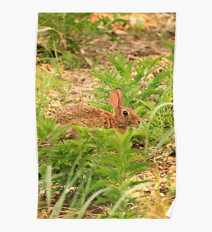 Wascaly Wabbit Poster