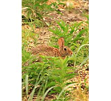Wascaly Wabbit Photographic Print