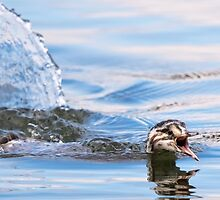 Juvenile Grebe by Ellesscee