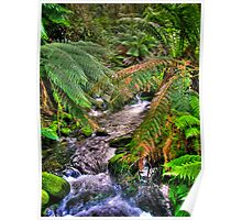rainforest stream Poster