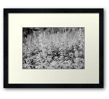 Herbal forest Framed Print