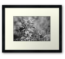 Floral stars Framed Print