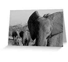 """close encounter"" Greeting Card"