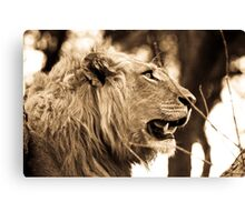 Piajo Lion Canvas Print