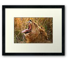 Piajo Male Yawning Framed Print
