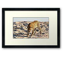 Leopard stalking Framed Print