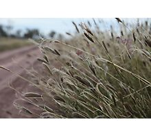 Buffel Grass Along the Road Photographic Print