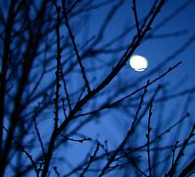Moon through branches. by PatrickLawrence