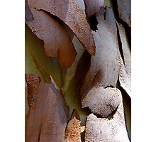 Peeling bark. Nature's abstract. Photographic Print