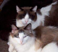 Three Cats Sticker