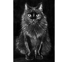 Black Feline Photographic Print